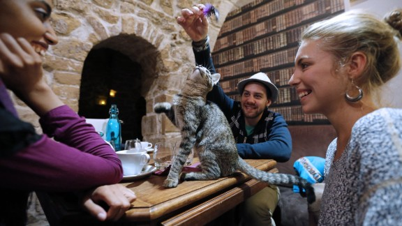 """""""Cat cafe"""" is among the words and phrases added to Oxford's online dictionary."""