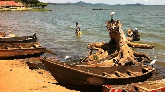 The shores of Busaabala, Uganda