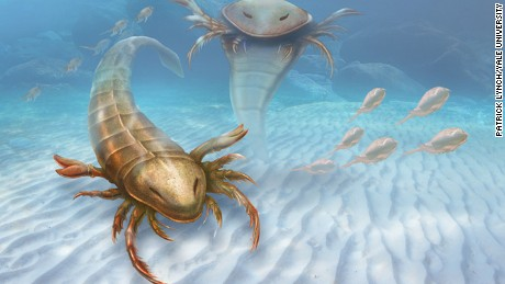 Meet the scorpion's prehistoric, bigger, badder cousin