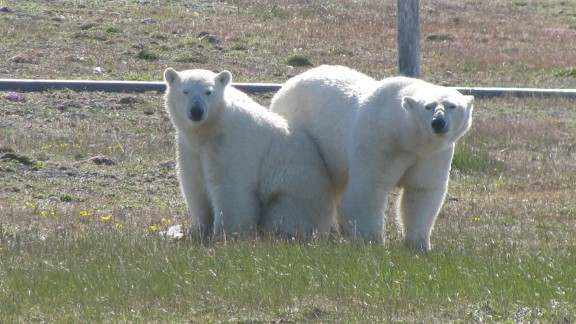 A group of polar bears has surrounded a team of Arctic researchers in a remote part of Russia, the WWF says.
