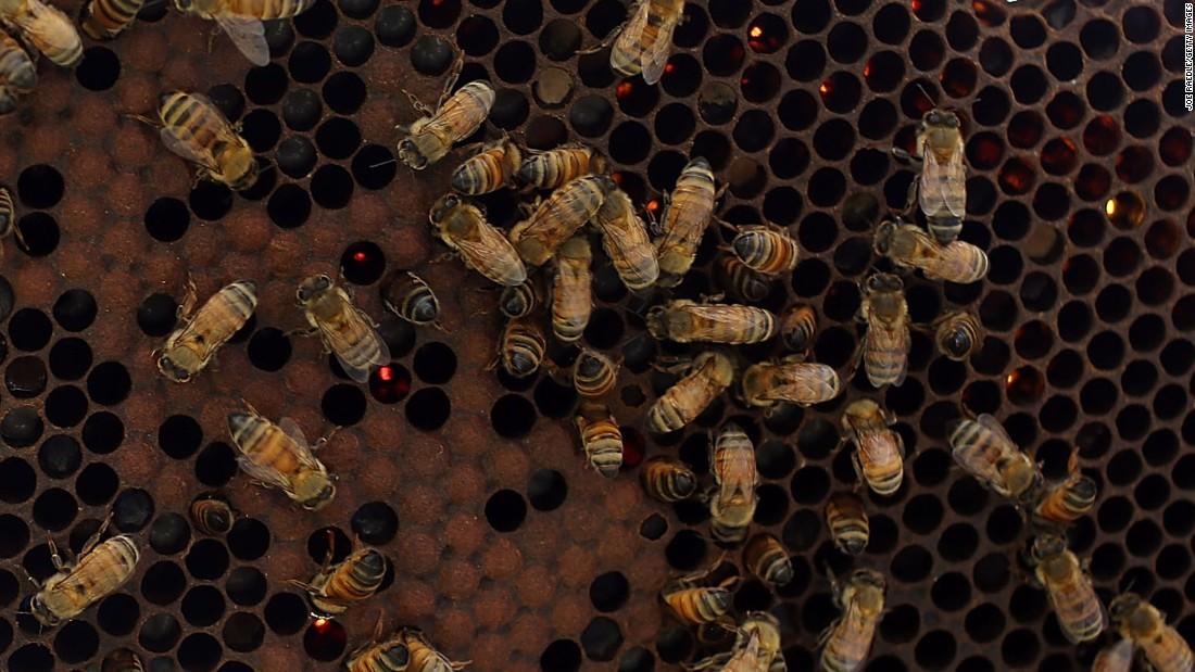 USDA will resume honeybee survey suspended this summer