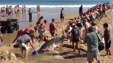 beachgoers try to rescue great white shark ireport sot_00000000.jpg