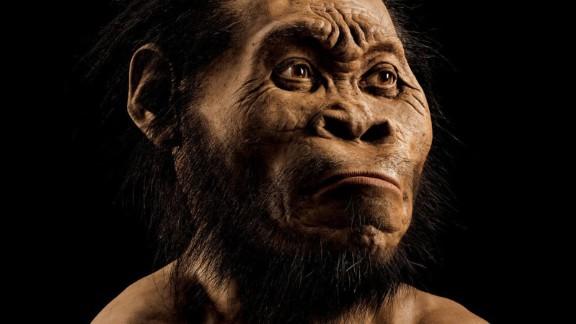A reconstruction of Homo naledi