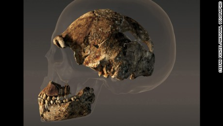 The braincase of a male Homo naledi is less than half the size of the modern human skull.