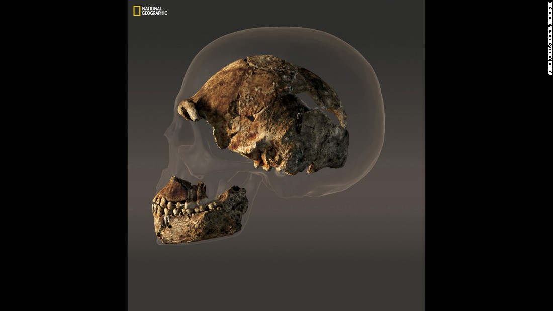 The braincase of a composite male skull of Homo naledi measures just 560 cubic centimeters in volume — less than half that of the modern human skull pictured behind it.