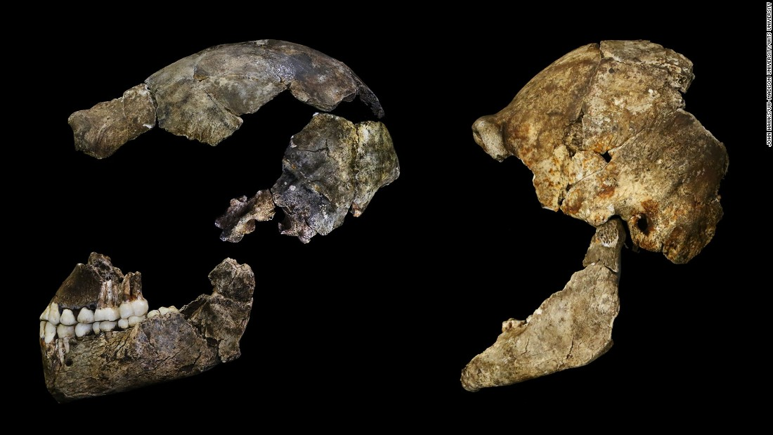Homo naledi's skull protected a brain about the size of an average orange, researchers say.