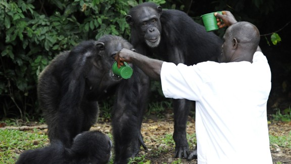 Workers must bring water to the chimps in addition to food, as the islands lack both potable water and good food sources for the animals. Water tanks that are supposed to ferry clean water to the island often malfunction.