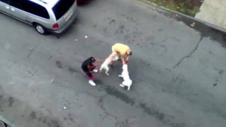pit bulls attack man bronx new york_00004011