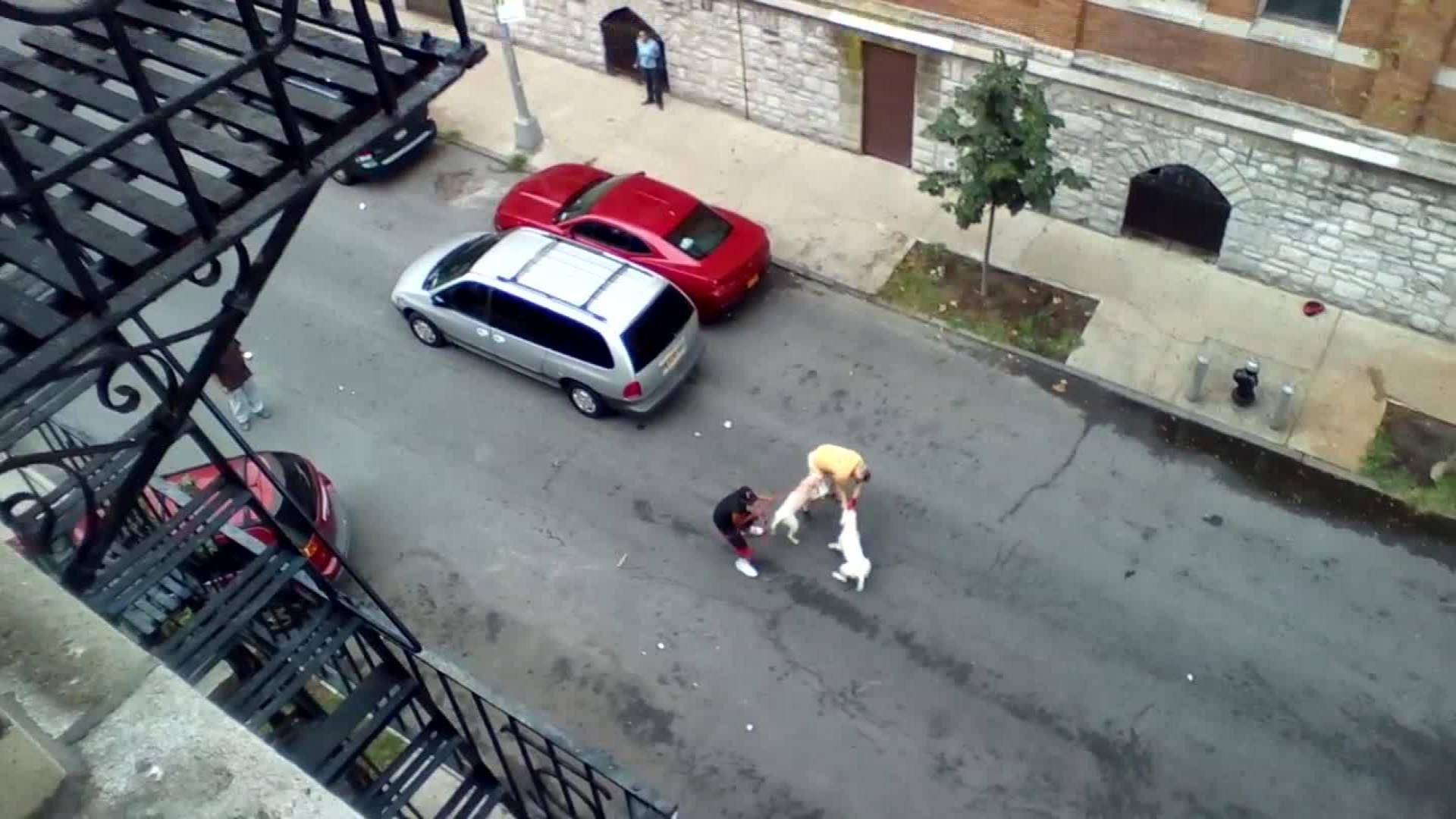 Pit bulls attack man in New York - CNN Video