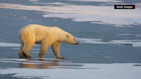 polar bear arctic climate change orig mg nws_00000720.jpg