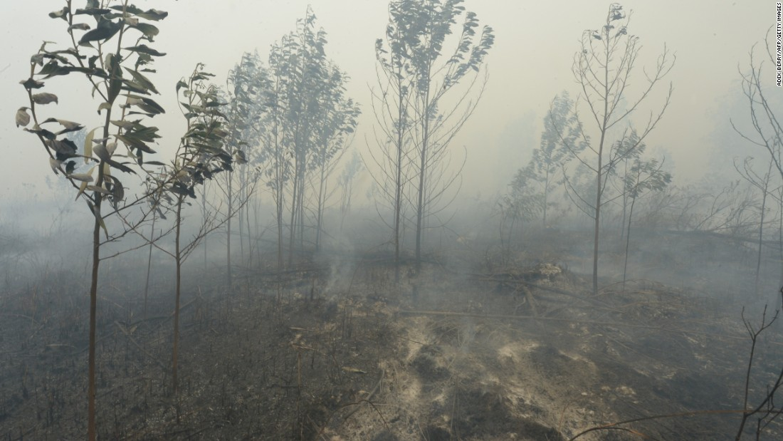 Burnt trees appear skeletal on a farmland after firemen managed to put out the fire in Kampar, Riau, on September 13.