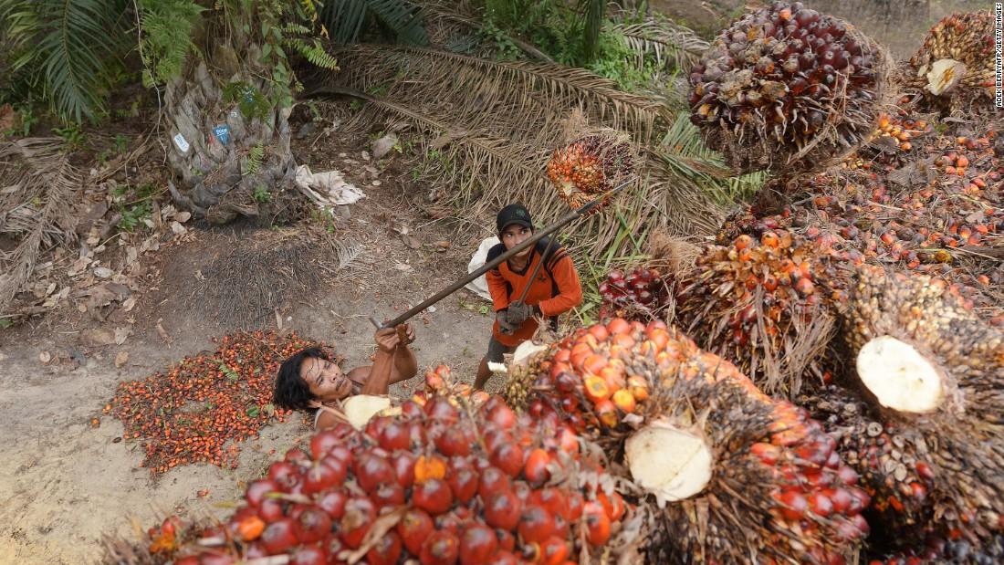 Workers load palm-oil seeds into the back of a truck at a plantation area in Pelalawan on Wednesday, September 16. For 18 years, plantations have farmed the rich peatlands that run along the Sumatran coast of Indonesia and Borneo Island.