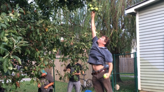 Concrete Jungle relies on volunteers to either pick fruit off the trees if they