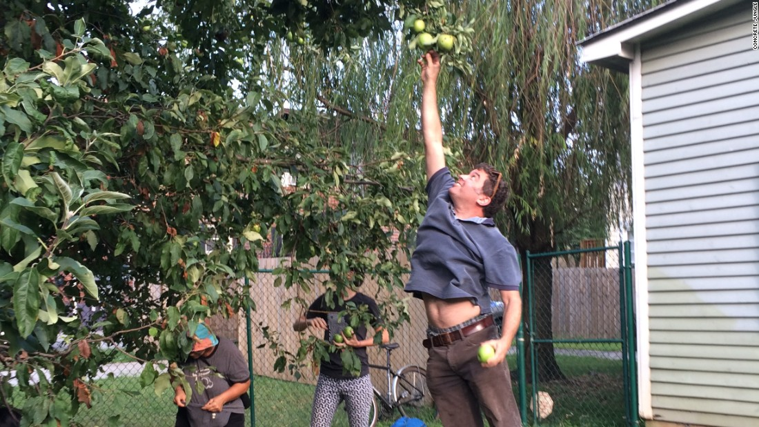 Concrete Jungle relies on volunteers to either pick fruit off the trees if they're tall enough or help shake the tree limbs so the fruit falls on a tarp.