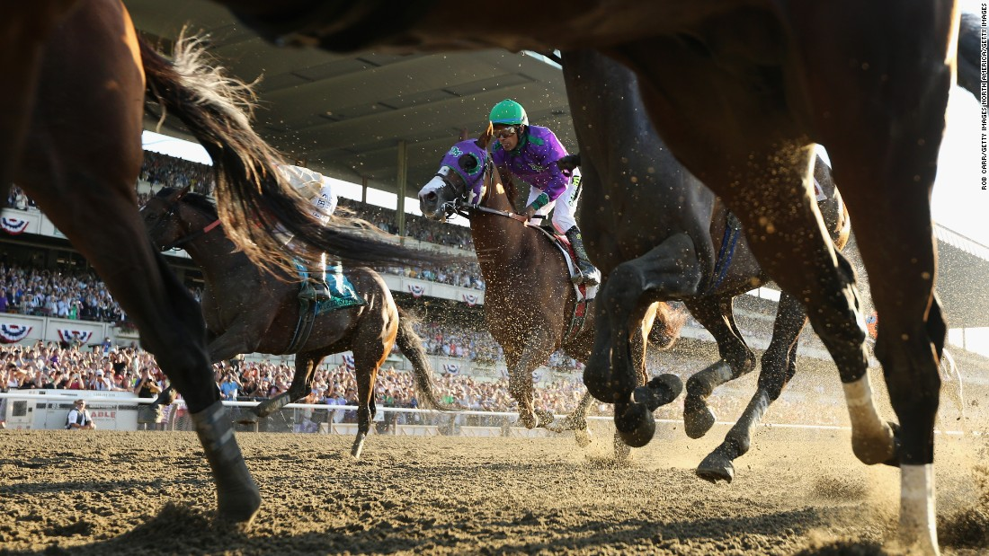 In the United States, California Chrome (with jockey in purple silks) earned itself a cult following despite coming up just short in its bid for the Triple Crown last year.