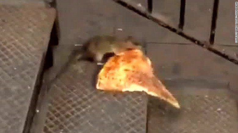 Pizza rat our newest obsession cnn for Classic house of pizza bolton ma