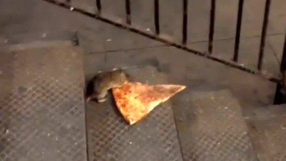 A hungry varmint nicknamed Pizza Rat captivated our hearts this summer with his determination to make off with a slice bigger than himself. It
