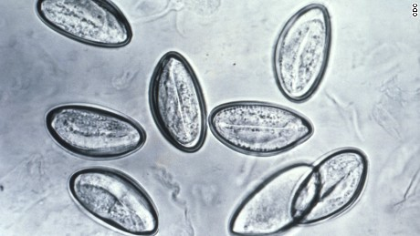 Pinworm infections occur when people swallow the worm eggs.