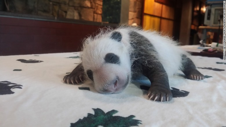 Baby Bei Bei in September 2015.