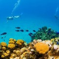 02 coral reefs