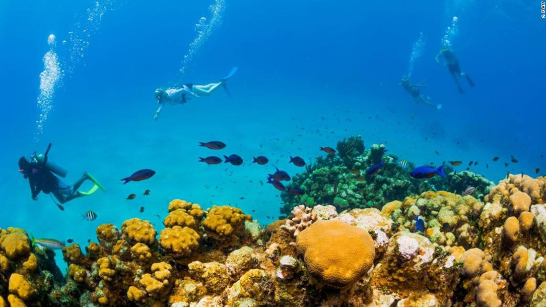 Some people imply that Grand Cayman's coral reefs can be relocated. But there's a problem: relocating entire coral reefs is impossible. It can't be done, and the proponents of the pier project who suggest otherwise are wrong.
