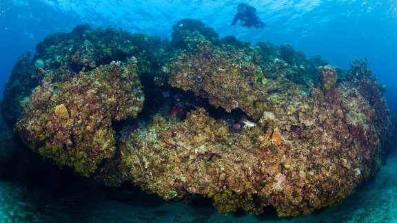 Coral reefs are large, complex three-dimensional structures that form over thousands of years, but only when biology, geology, chemistry and physical factors align under special circumstances.