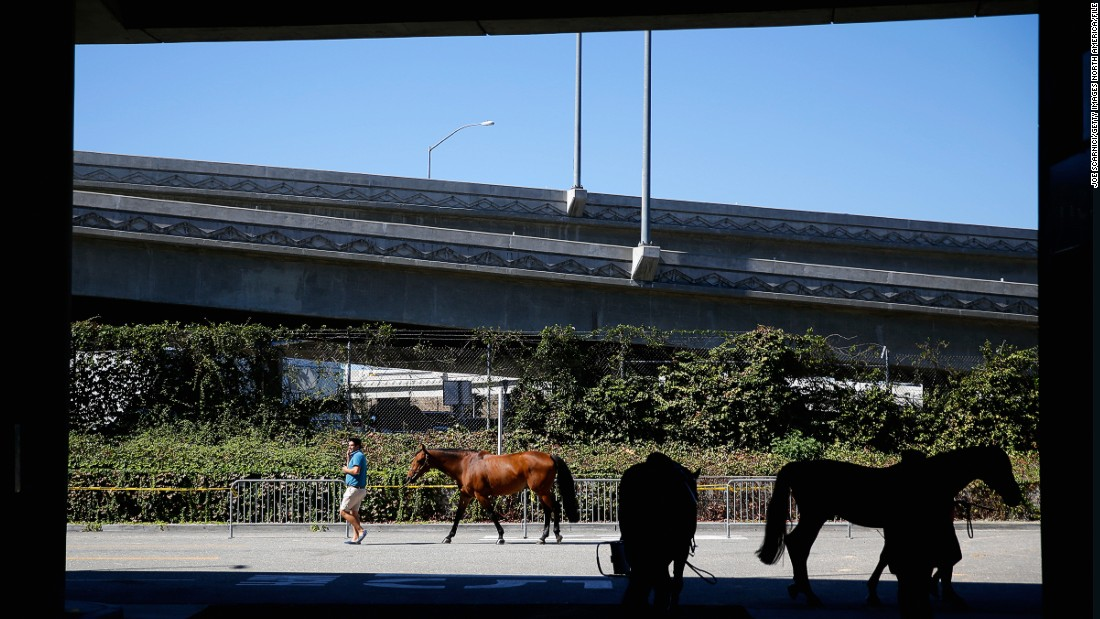 Horses being guided to their temporary stables outside the convention center.