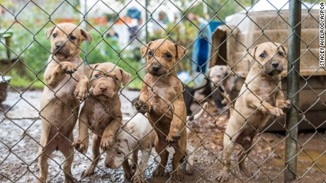 Among 23 dogs seized at a property in Huntersville, North Carolina, were a handful of puppies.