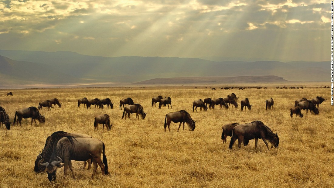 "Sometimes called ""Africa's Garden of Eden,"" the Ngorongoro Crater is a 12-mile-wide ecosystem within an ecosystem that was created by a massive collapse of land following a volcanic eruption. Labeled one of the seven natural wonders of Africa, the crater sits at 5,900 feet above sea level and evidence suggests hominids have lived in the wider conservation area for over 3 million years. Near Arusha in the north of Tanzania, it is one of the world's most unchanged wildlife sanctuaries."