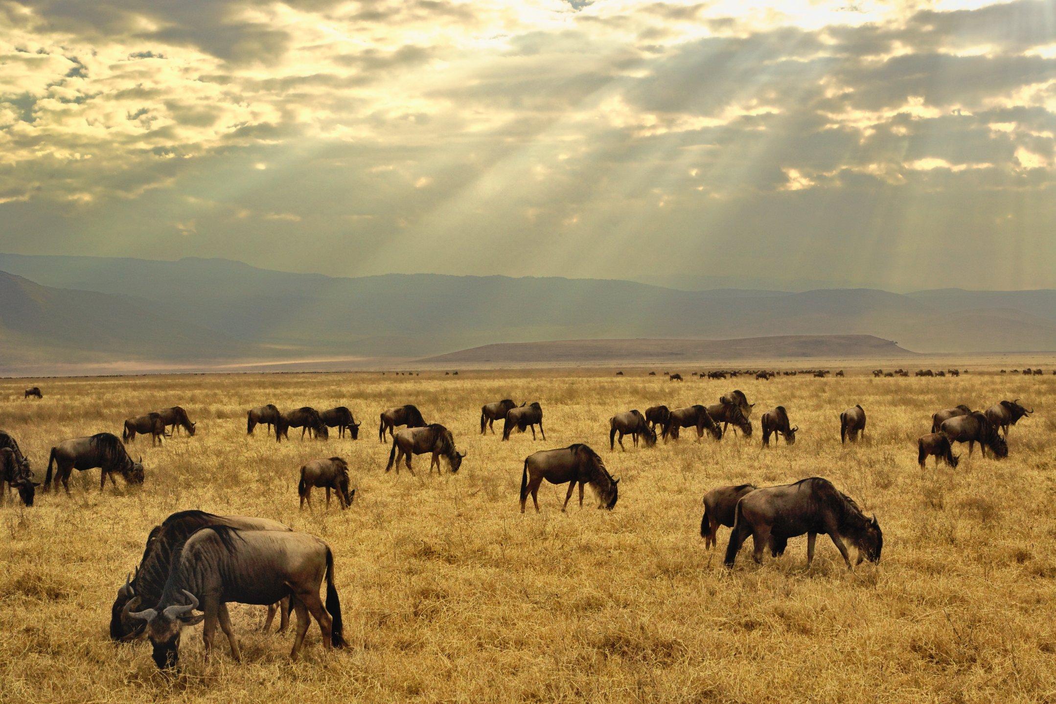 20 reasons to visit Tanzania now | CNN Travel