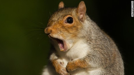 Bit by a squirrel? There's now a code for that (W53.21XA)