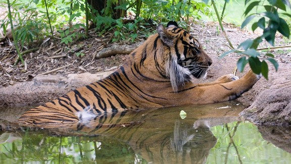 Jalal was euthanized at Zoo Atlanta in  2010, two weeks shy of his 17th birthday.