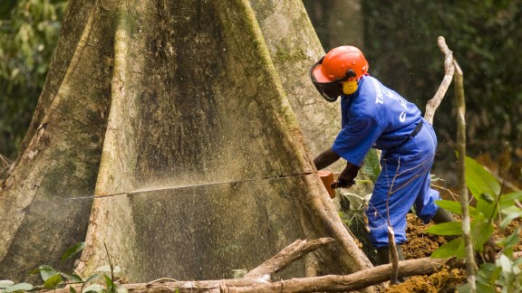 A worker cutting a tree in Libreville, Gabon's capital.