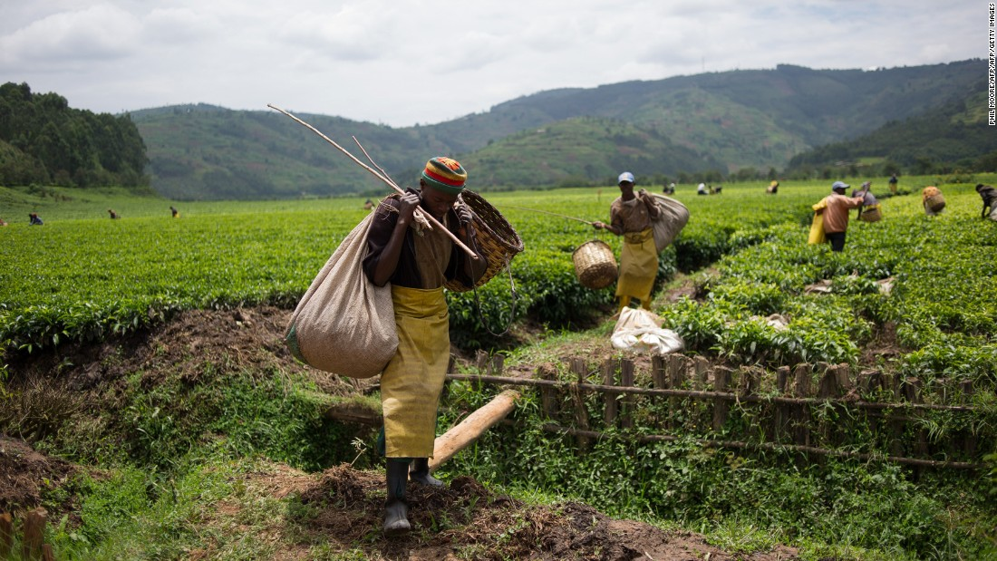 Within the top 20 nations globally for the quality of its institutions and labor market efficiency, Rwanda continues its five-year ascent. Its tea industry may be growing, but low infrastructure, health and higher education rankings are preventing it climbing higher up the rankings.