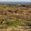 waggoner cowboy surveys land