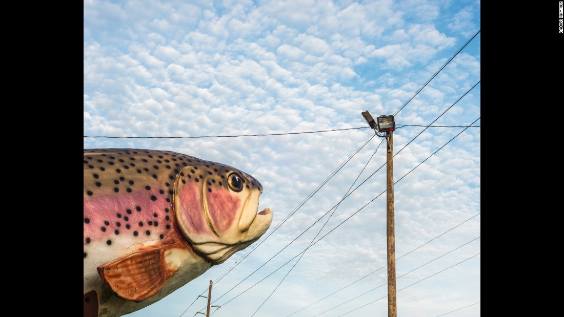 """Rainbow Trout"""