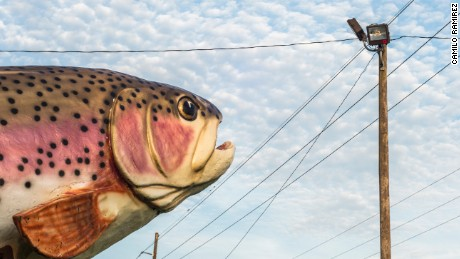 """Rainbow Trout"" from the series ""The Gulf"""