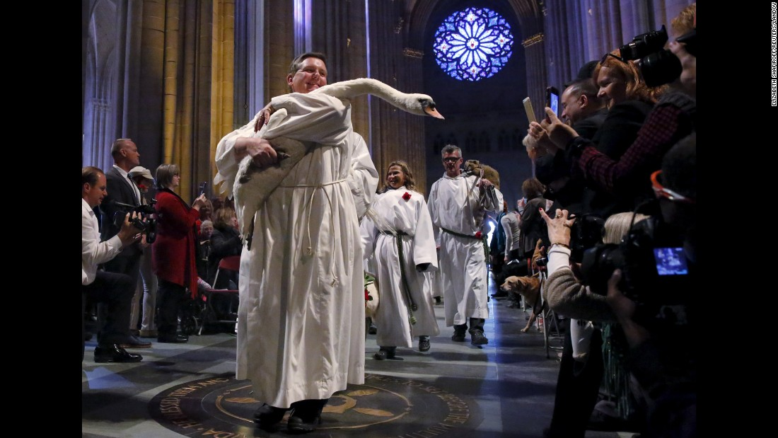 A swan is carried down the nave of the cathedral during the Procession of the Animals at the 31st annual Feast of Saint Francis and Blessing of the Animals at The Cathedral of St. John the Divine in New York on Sunday, October 4.