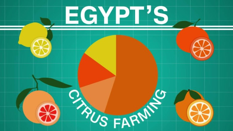Egypt: Africa's leading citrus producer