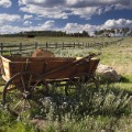 berman ranch horse cart