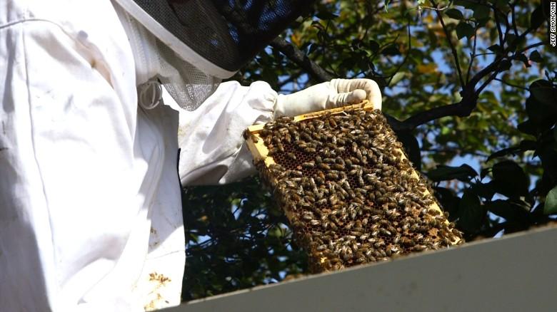 Karen Pence adds beehive to VP residence grounds - CNNPolitics