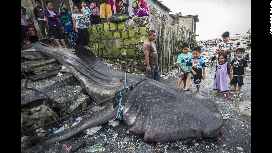 Locals gather around a dead whale shark that was caught by fishermen near Surabaya, Indonesia, on Monday, October 12.