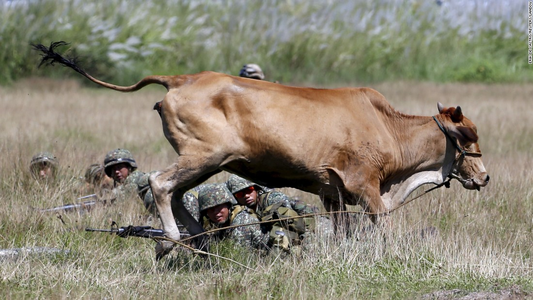 A cow runs past troops from the United States and the Philippines as they take part in a joint exercise at a naval base in San Antonio, Philippines, on Friday, October 9.