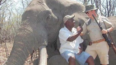 7b23ea353 Massive Zimbabwe elephant s killing  Legal