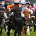 Shetland Pony Gold Cup 4