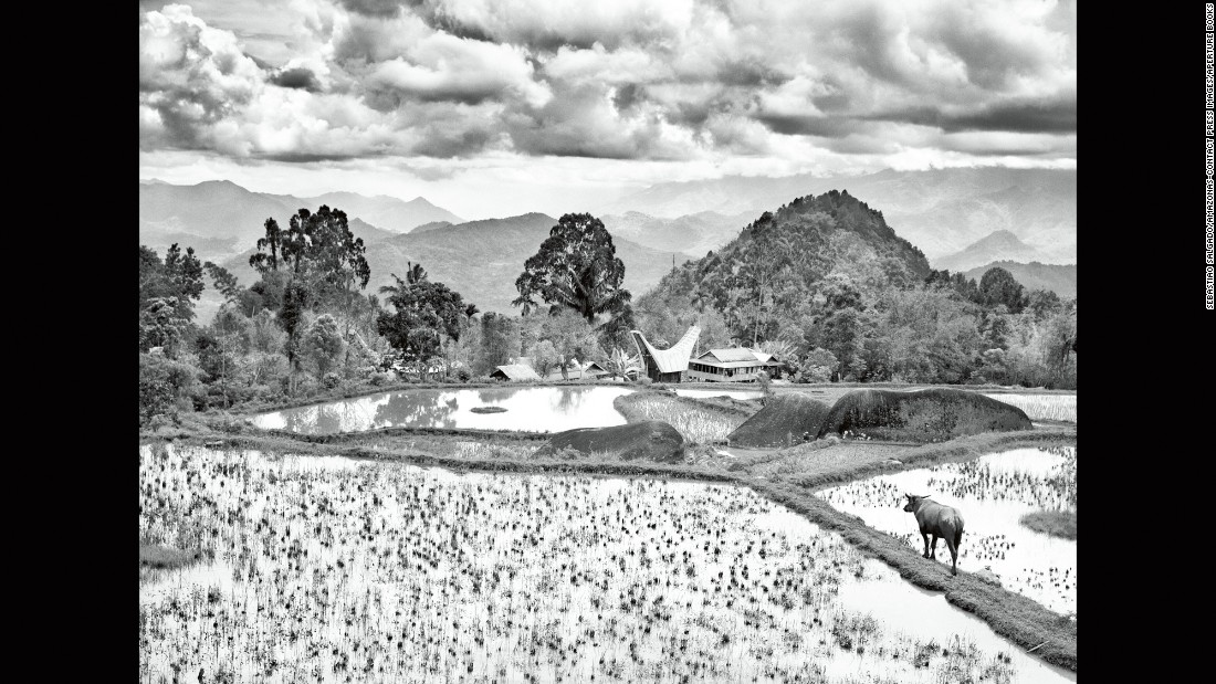 "A coffee field is pictured in 2014 around the Toraja mountain area of Indonesia's  Sulawesi Island. ""It is perhaps an odd thing for a Brazilian to admit, but I never drink coffee. And yet it runs through my veins,"" Salgado wrote in his book."