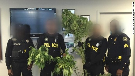 Atlanta Police display marijuana plants they say were found in suspect's vehicle.