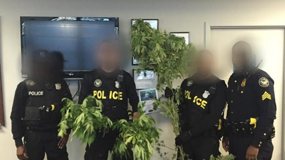 Atlanta Police display marijuana plants they say were found in suspect