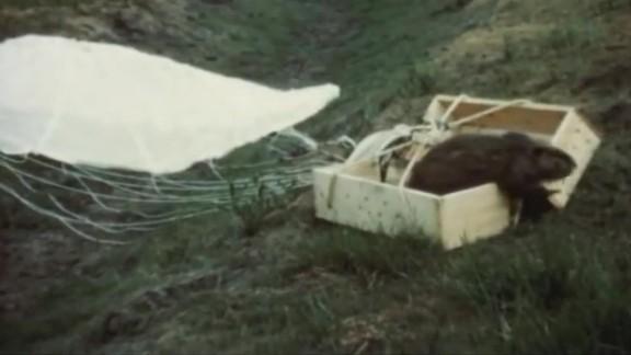 Long lost parachute beaver footage cnni_00004809.jpg