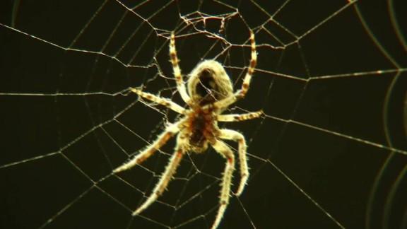 thousands of spiders bridge ohio pkg_00001901.jpg